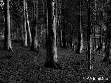 The dark woods