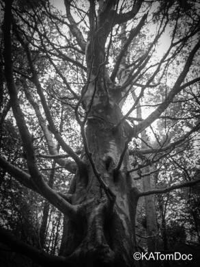 The fear tree