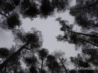 trees talking